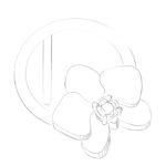 bijoux phalaenopsis
